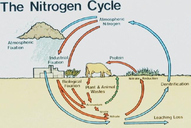 Ecology on The Water Cycle 2